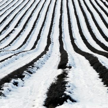 Les récoltes de cette fin d'hiver