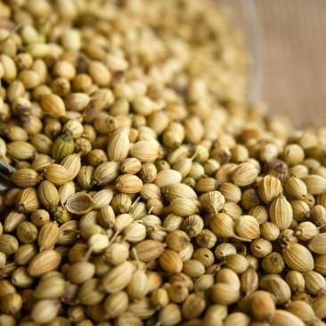 Herbes aromatiques et épices